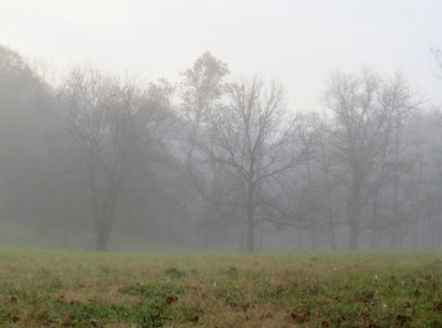 mist on an Ozark pasture