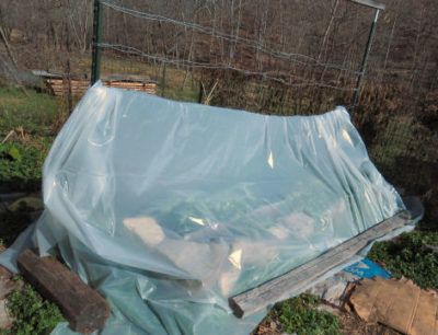 plastic over raised garden bed