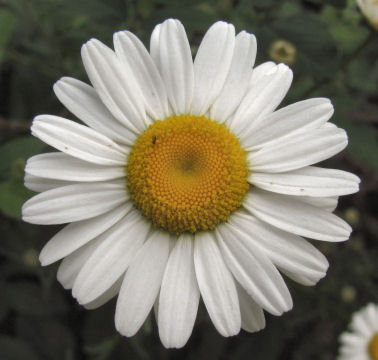 botanical families include Asteraceae