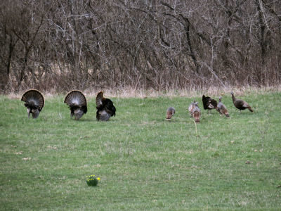 turkey season display