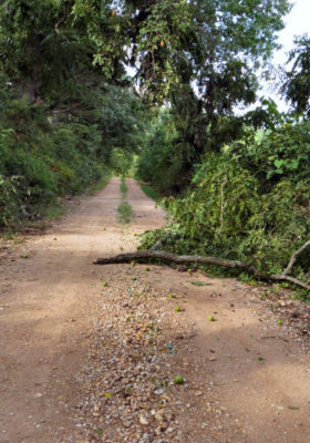 branches can be road hazards