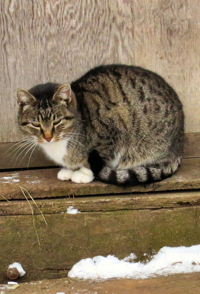 Cloudy Cat waiting at barn door