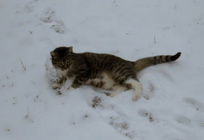 Cloudy Cat rolling in snow