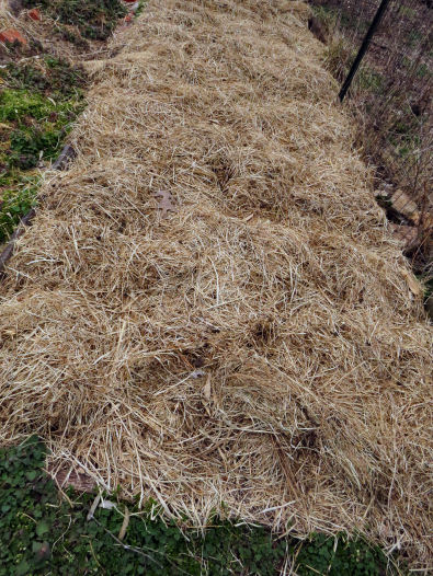 growing older gardening trick: mulch