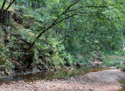 The creek in summer