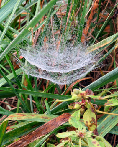 double spider webs in morning dew