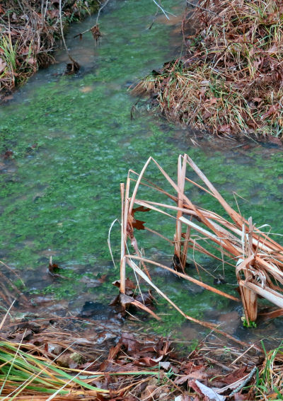 water cress supply