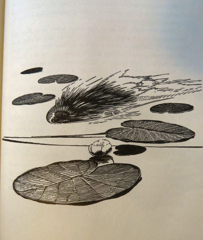 "porcupine swimming sketch from ""Canoe Country"""