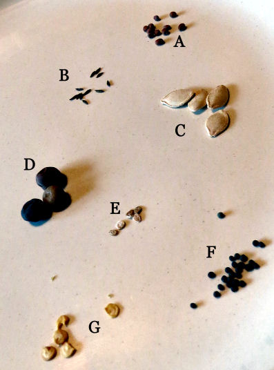 seed diversity shows here