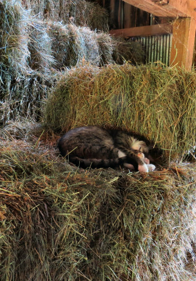 stacks of hay ends haying time