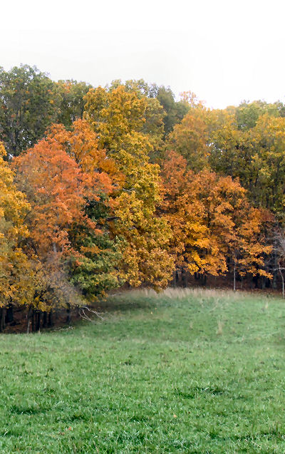 fleeting fall colors not so past years